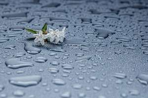 rain-drops-412465_1280